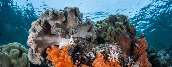 One of The Best in The World: Wakatobi Marine National Park